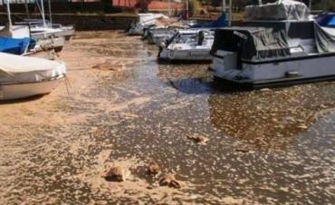 CONTAMINACION DE LAS AGUAS DEL RIO URUGUAY,